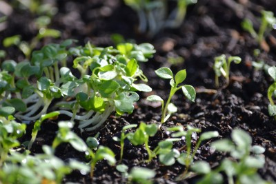 Winter Seedlings