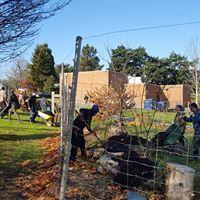 Orchard mulching 2017